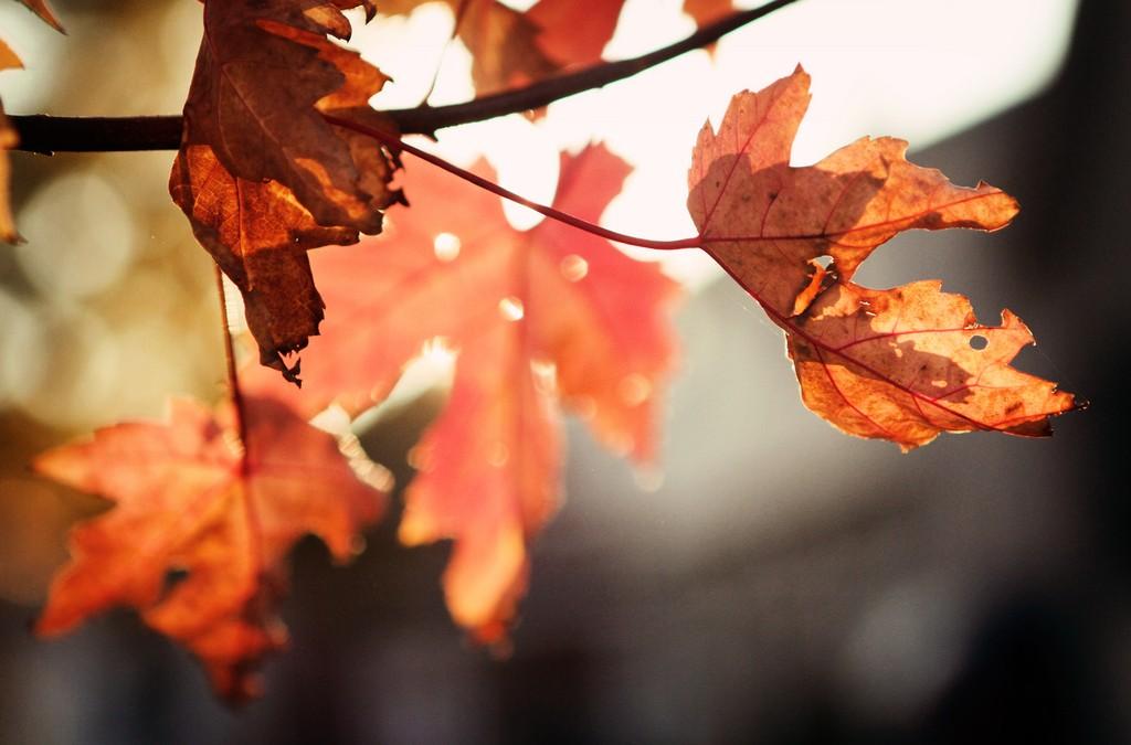 Leaf bokeh, by RebeccaVC1